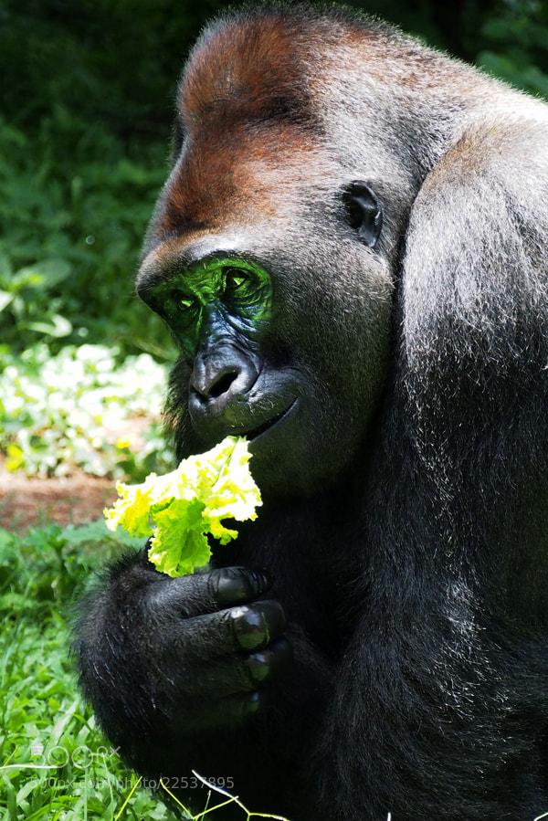 Photograph friendly by Prabu dennaga on 500px