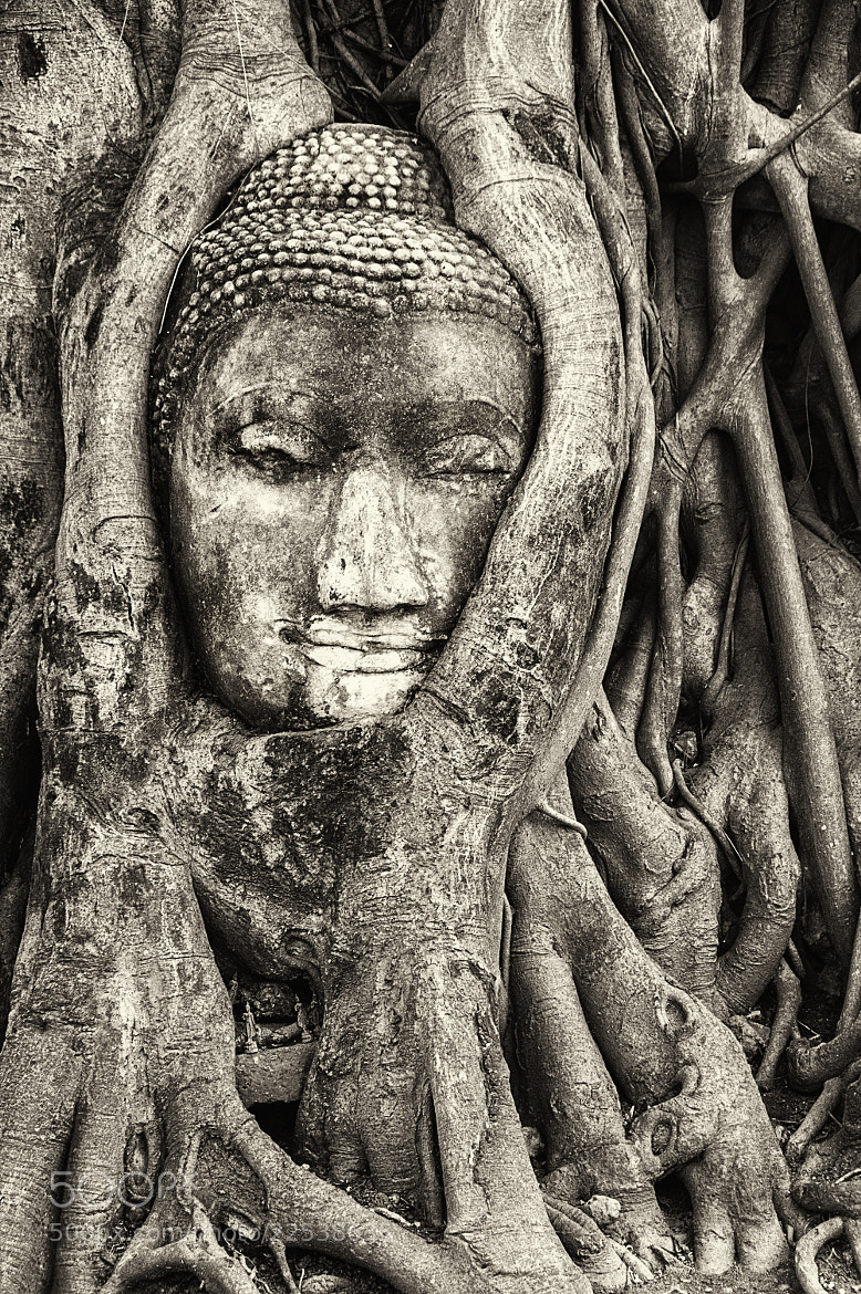 Photograph Buddha Face in a Tree by Csilla Zelko on 500px