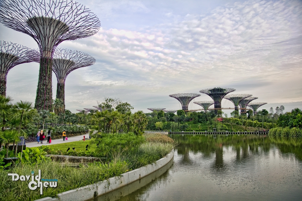 Photograph Gardens by the Bay, Singapore by David Chew on 500px