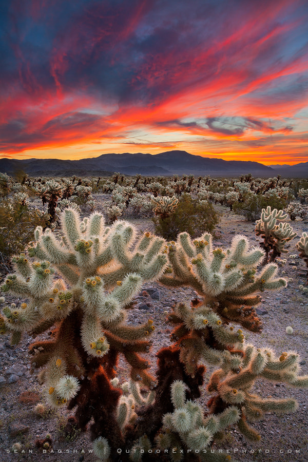 Photograph Desert Symphony III by Sean Bagshaw on 500px
