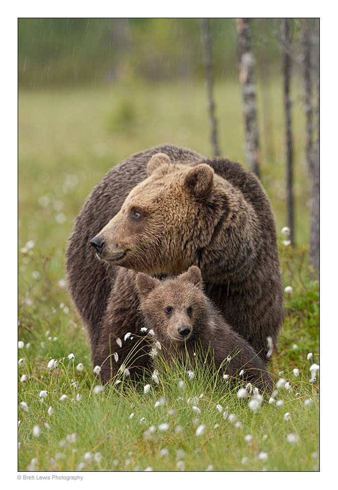 Photograph Mother & Cub by Brett Lewis on 500px