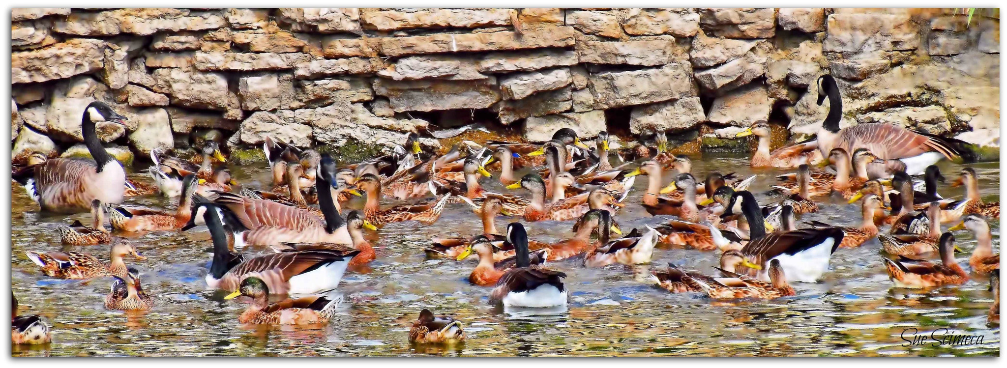 Photograph Rush hour at the ole swimmin' hole by Sue  Scimeca on 500px