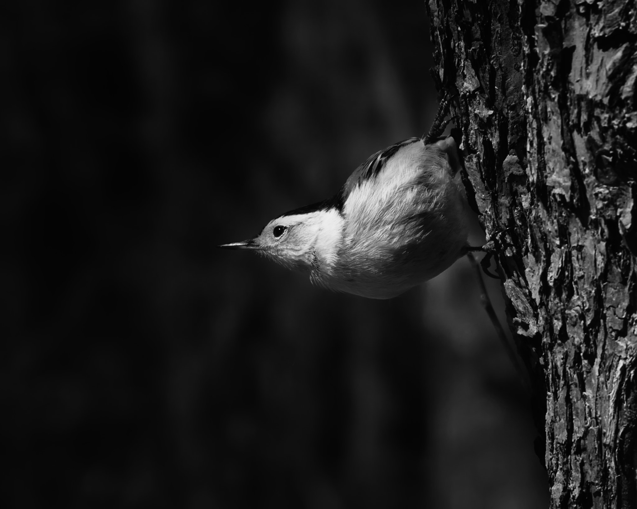 Photograph NutHatch by Matt H on 500px