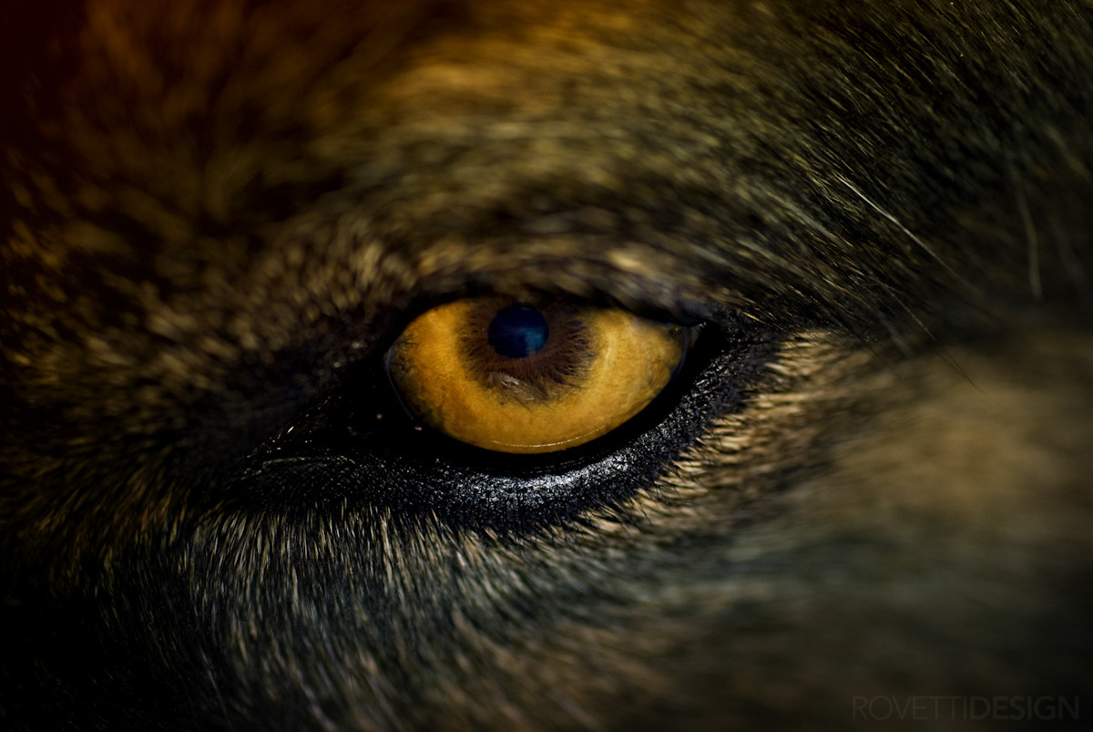 Photograph The Beast Eye by Stephen Rovetti on 500px
