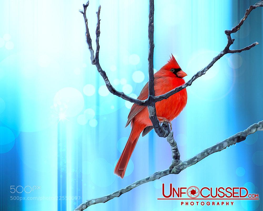 Photograph Chubby Winter Redbird by Bill Tiepelman on 500px