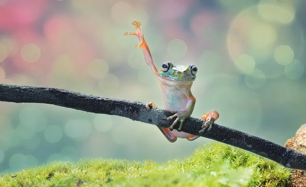 Photograph gimme five by Ayie  Permata Sari on 500px