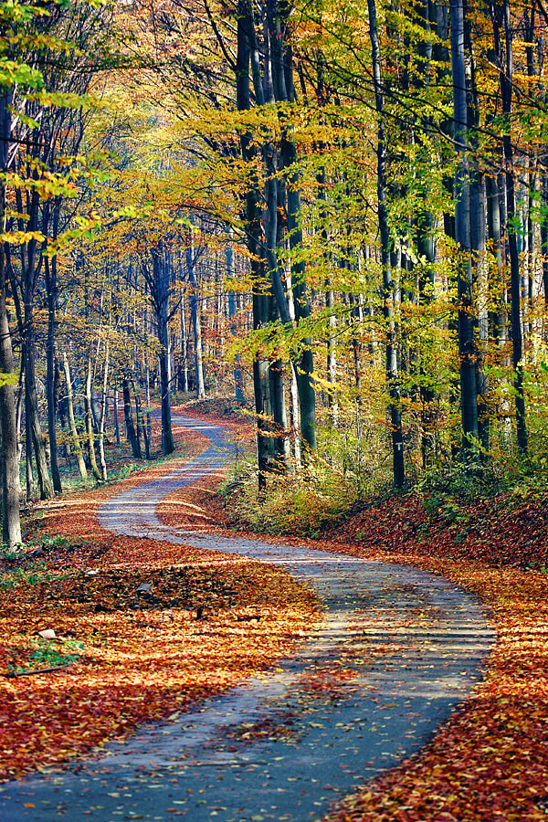 Photograph The Winding Path by Oliver Leicher on 500px