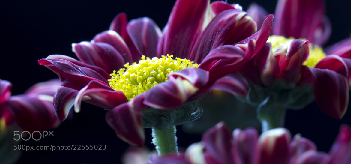 Photograph Together by Jino  on 500px