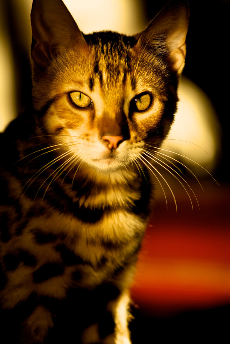 Photograph Diego's Eyes by DAN Hebert on 500px