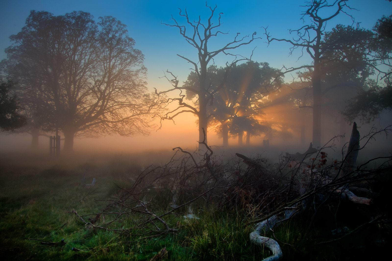 Photograph Richmond Park - Sunrise by Steve Bryson on 500px