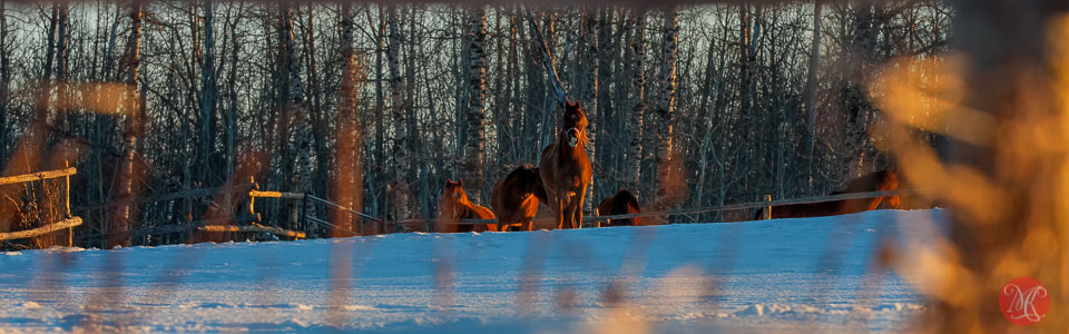 Photograph I saw a horse.. by Kasia Sokulska on 500px