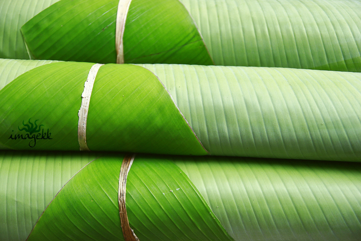 Photograph Banana Leaf plates by Komal Kanth on 500px