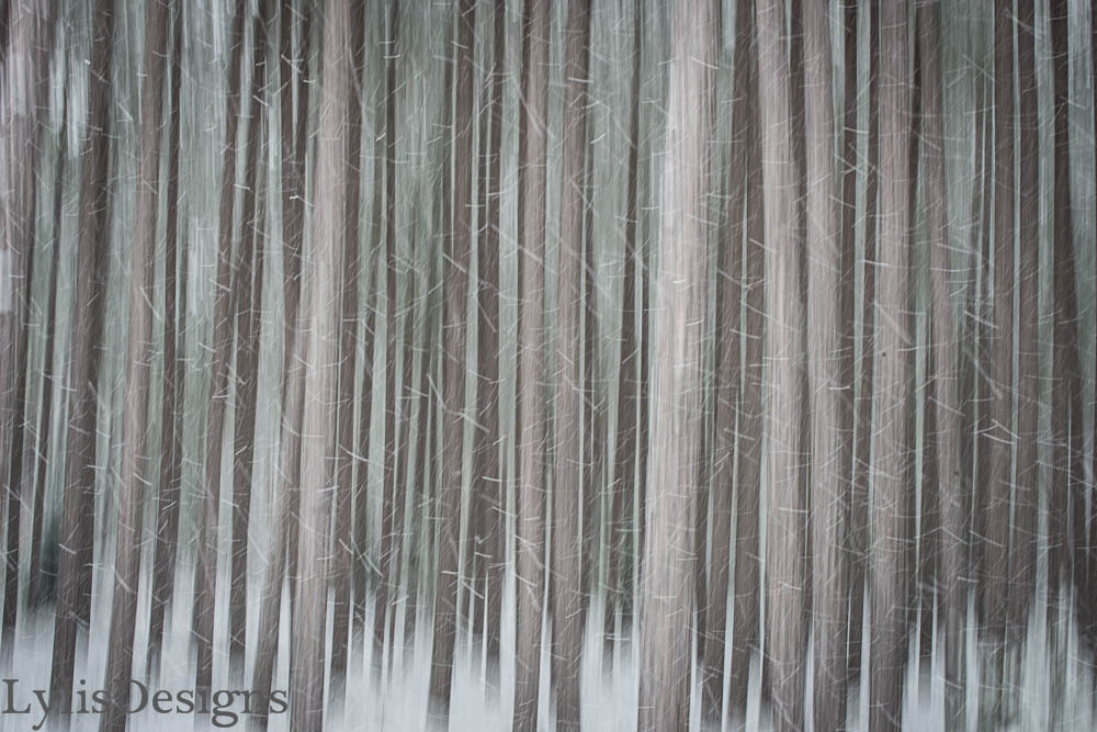 Photograph Pine forest in the snow... by Lylis Designs on 500px