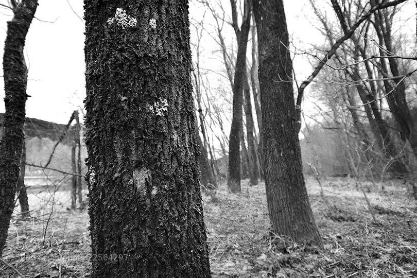 Photograph Woods by Michael Hansmann on 500px