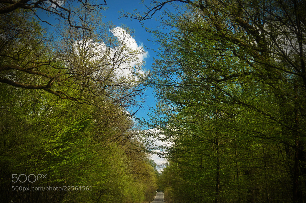 Photograph Forest road by Olivia Dodon on 500px