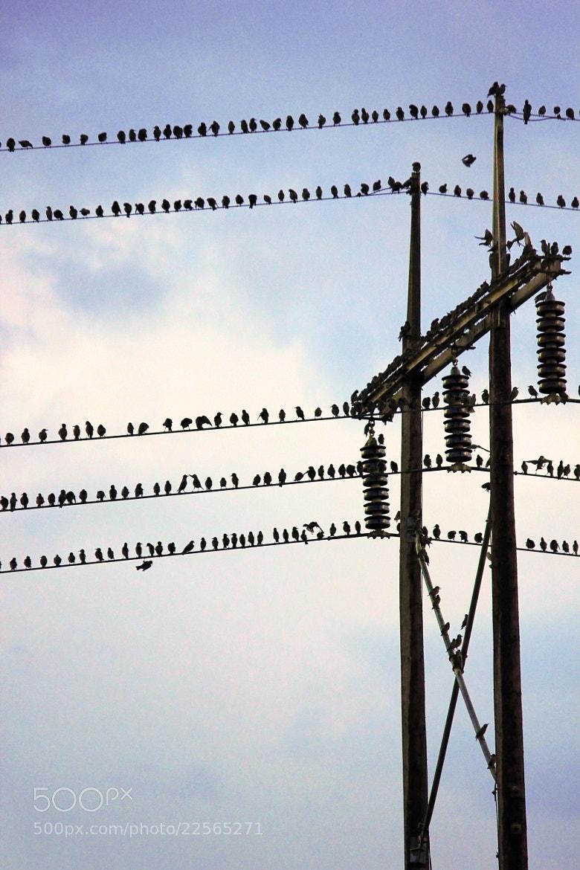 Photograph birdwire 2 by Giorgio Chasourakis on 500px