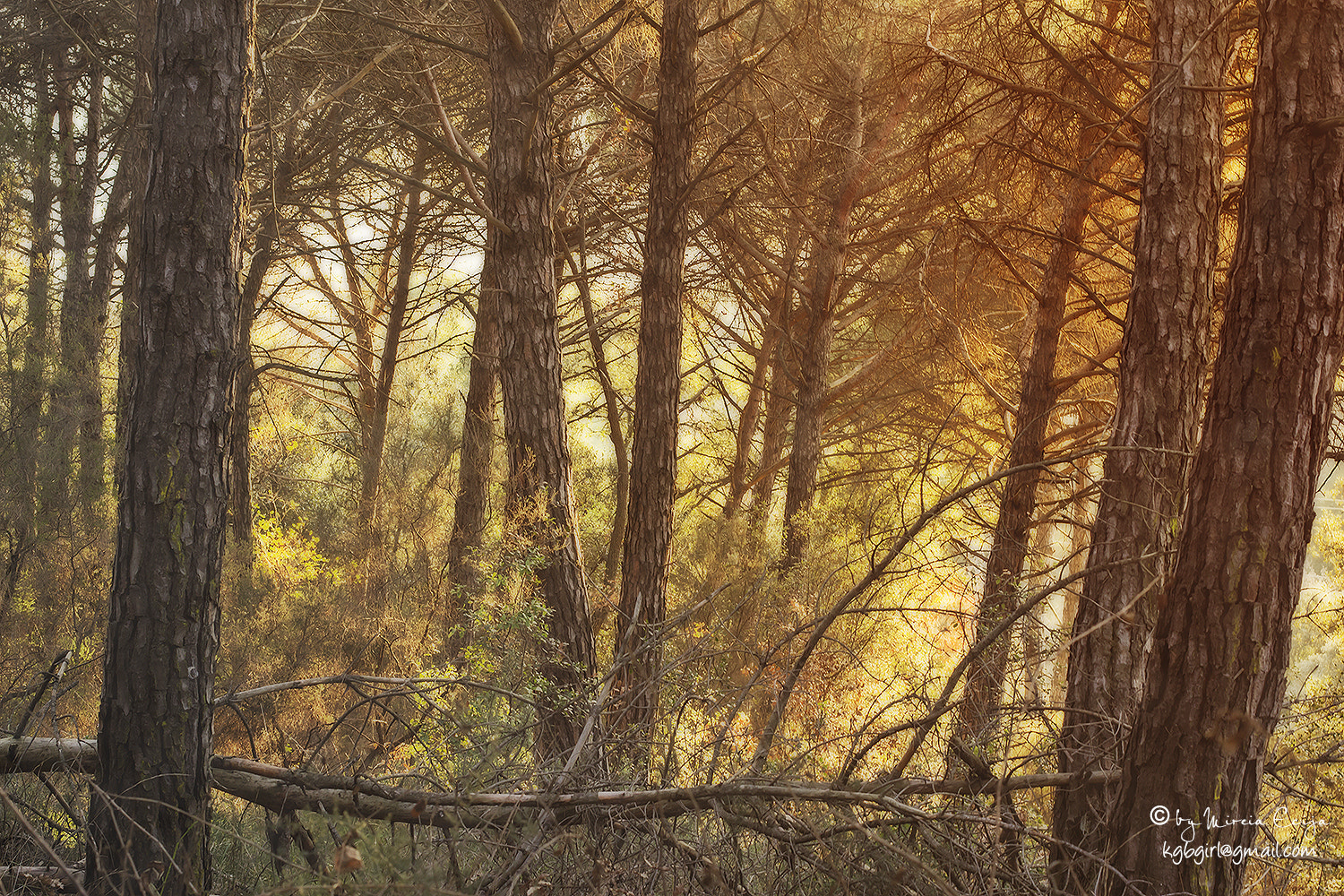 Photograph the magic forest by Mireia Ecija on 500px