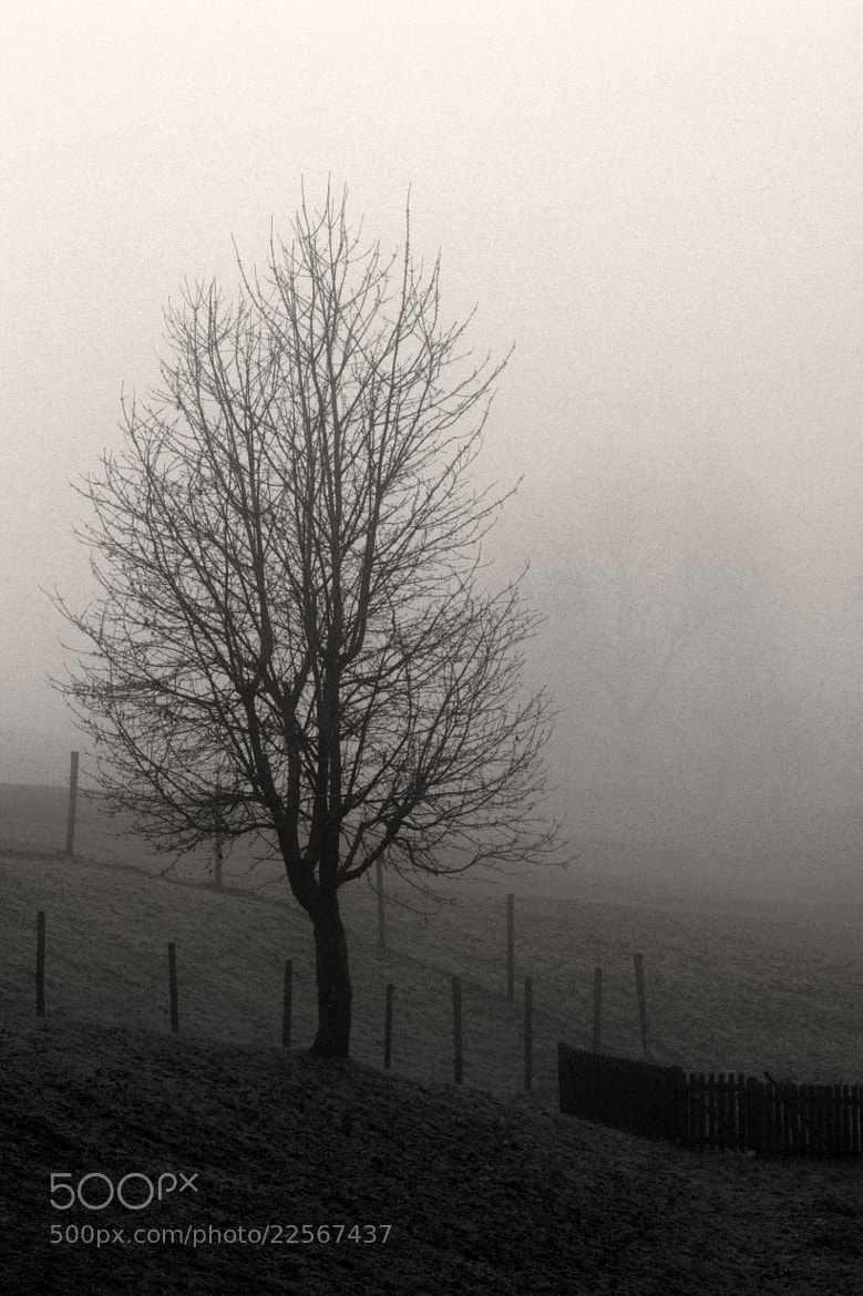 Photograph The Fog by Tim  Taylor on 500px