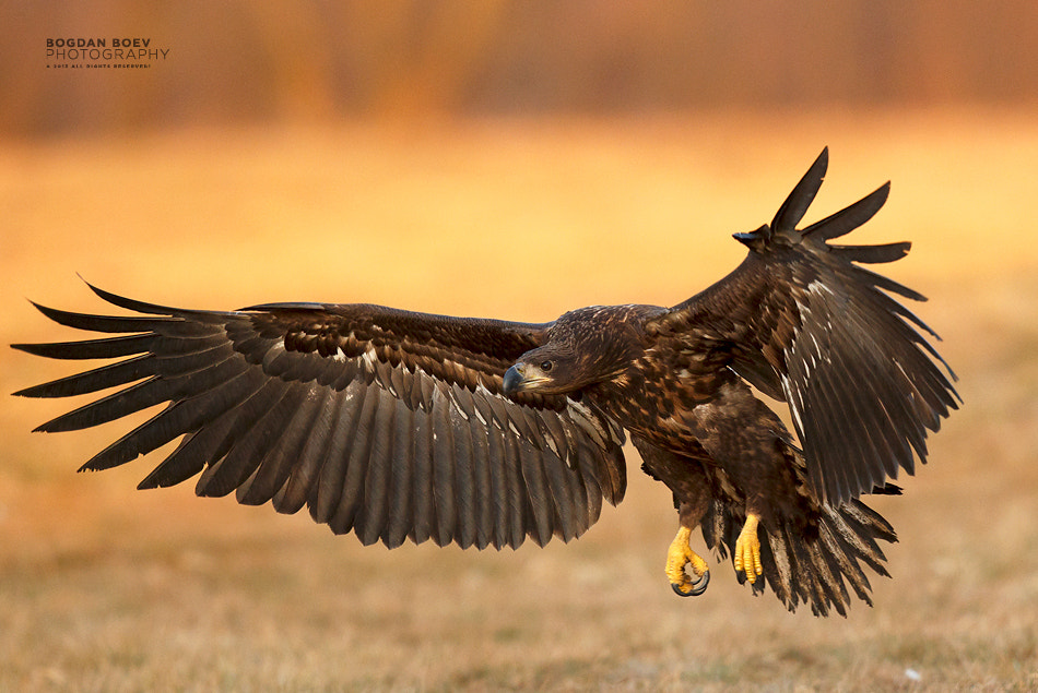 Photograph Landing by Bogdan Boev on 500px