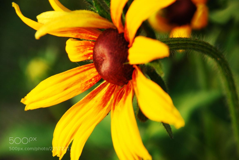Photograph Yellow Flower by Irfan Fazili on 500px