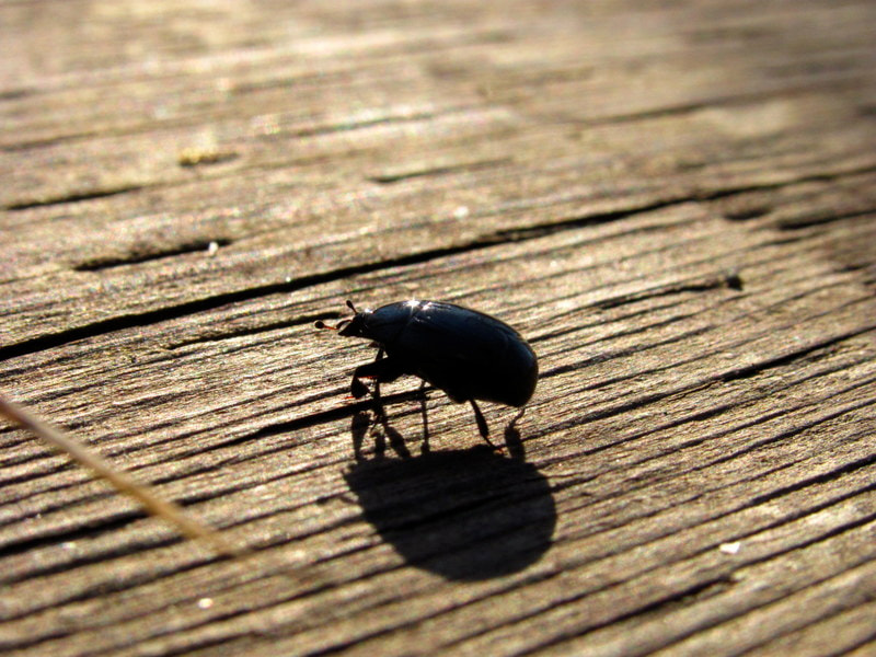 Photograph Sparkly Bug by Jessie Violet on 500px