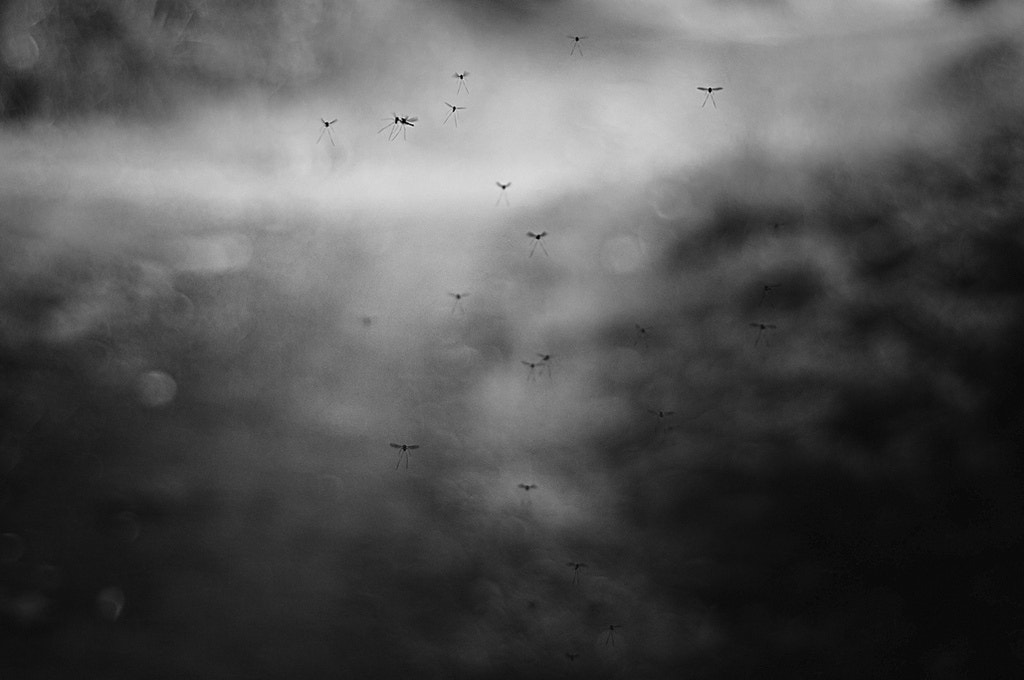 Photograph Itsy-bitsy fly by Line Berre on 500px