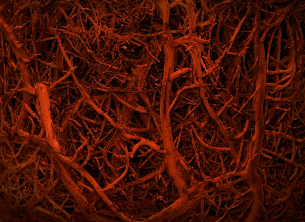Photograph Roots by Sir Trauti on 500px