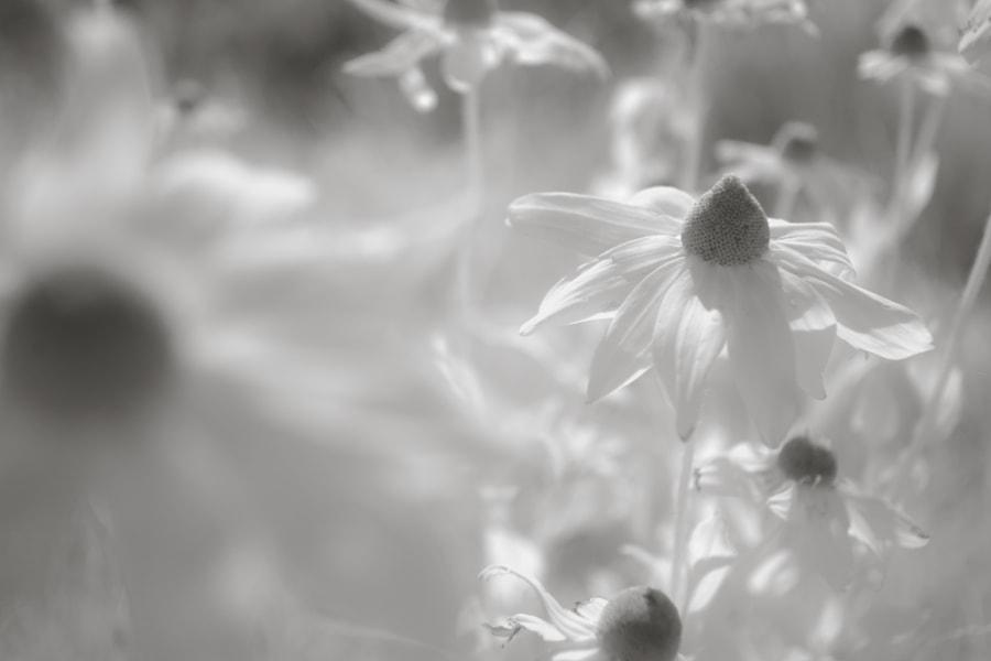 500px.comのKousuke Toyoseさんによるflowers