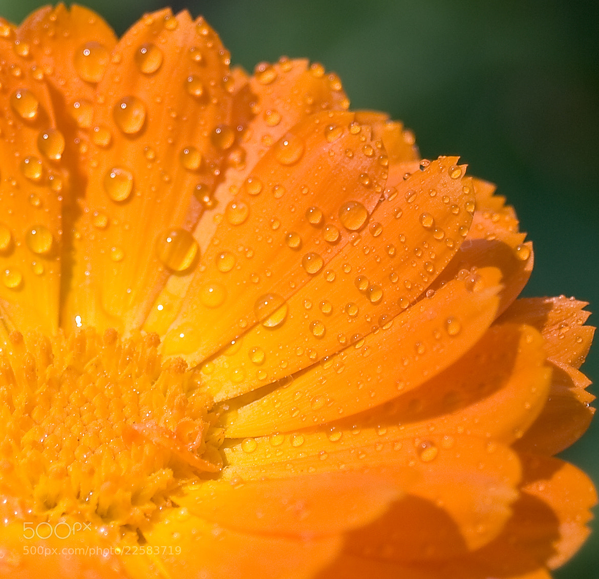 Photograph Water drops by Joseph M.G. on 500px
