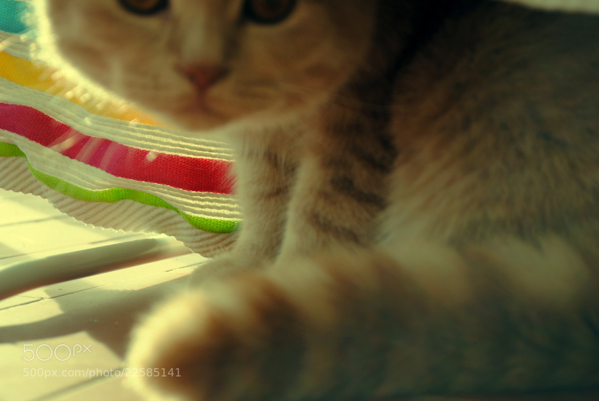 Photograph What's that? by Ana Catarina on 500px