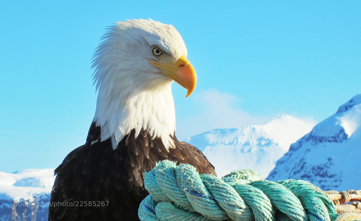 Photograph Pretty Boy, Aleutian Islands, Ak. by Jack Molan on 500px
