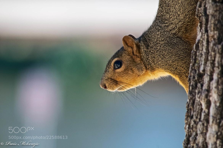 Photograph Squirrel  by Paris Mckenzie on 500px