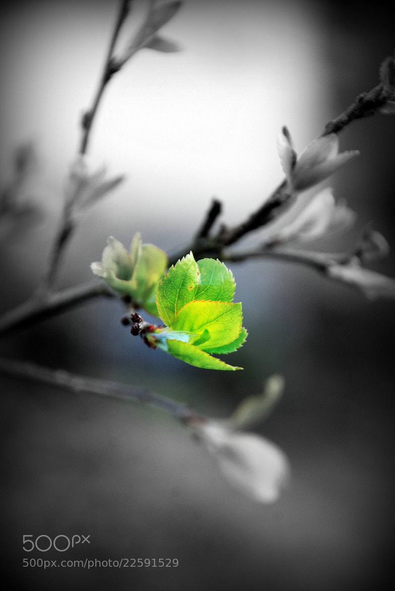 Photograph Spring's First Breath by Ashley Z on 500px