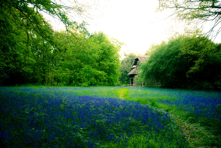 Photograph Blue Bells by Katia Trudeau on 500px