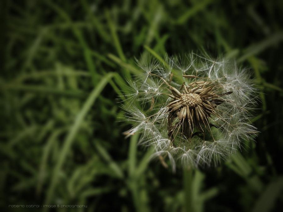Solo quei sentimenti de Roberto Cabral │Image & Photography en 500px.com