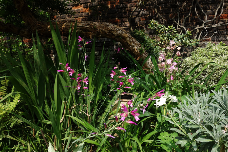 Summer Garden by Sandra on 500px.com