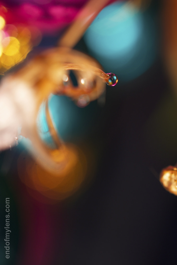 Photograph Christmas Bubble by Suzanne Copleston on 500px