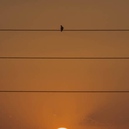 A bird above the sun