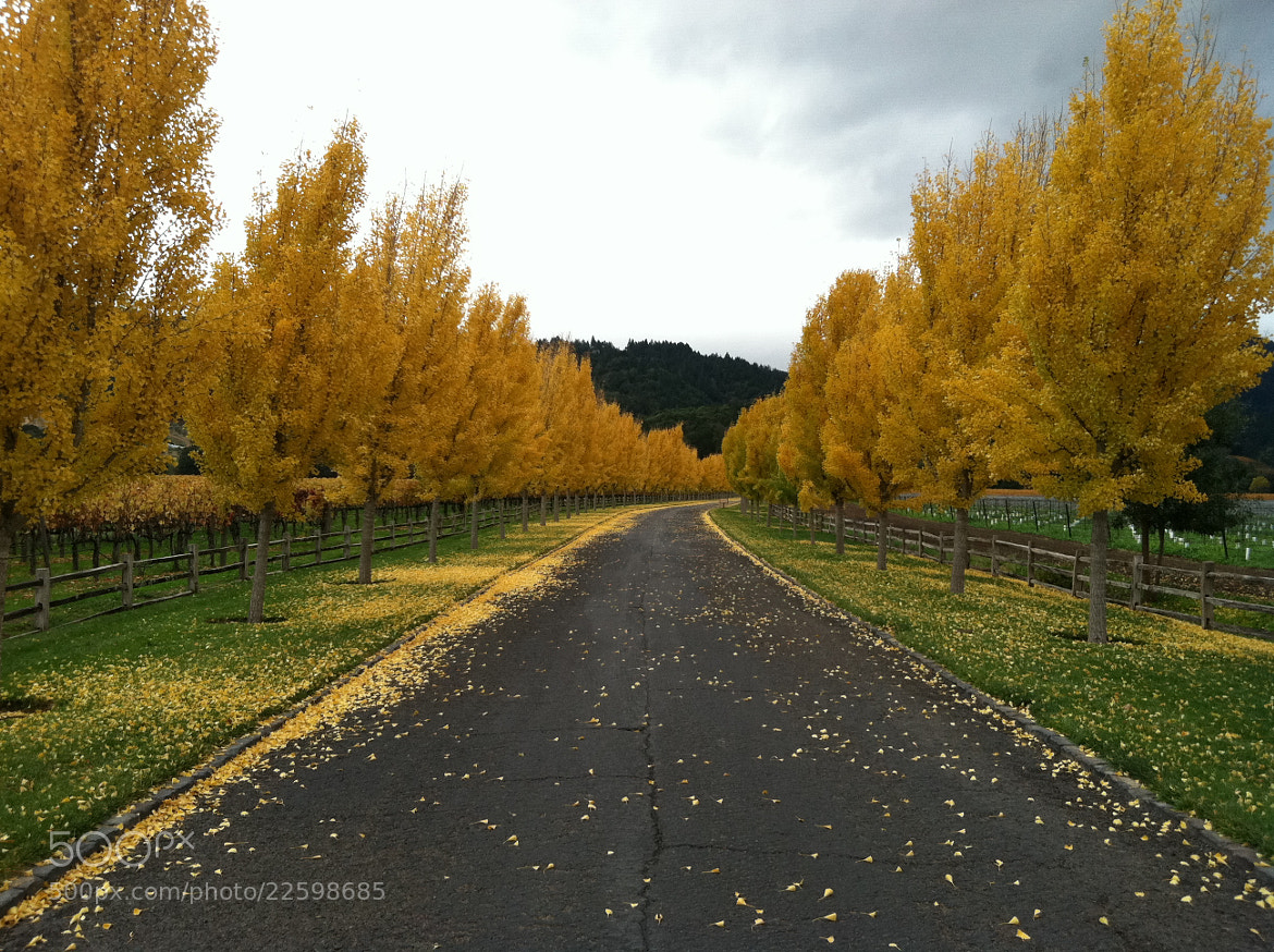 Photograph The Golden Road by Patrick Ainsworth on 500px