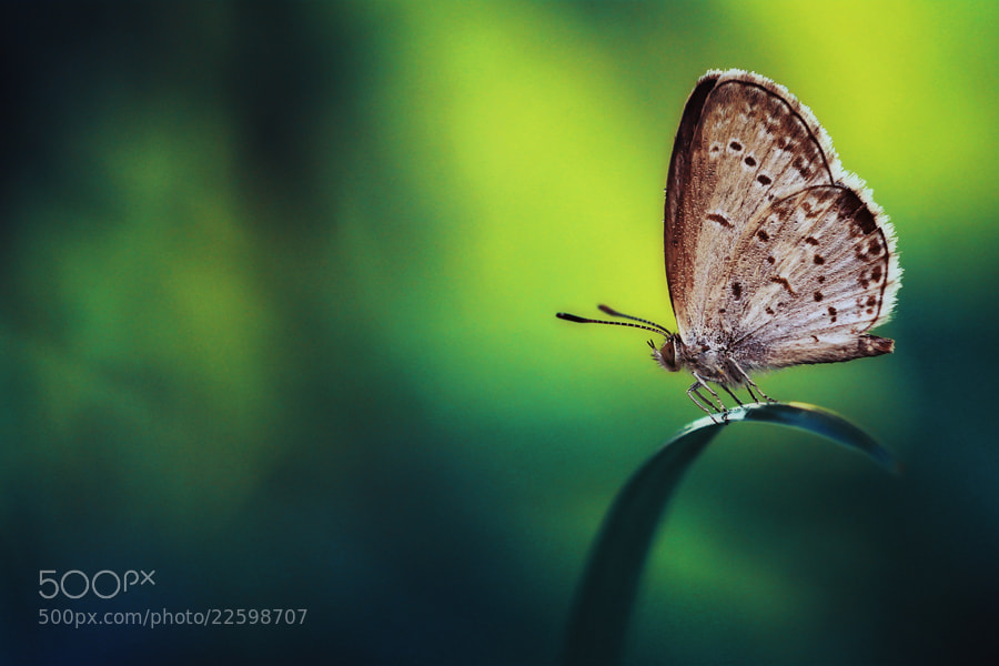 Photograph Galau by Sabriamin M on 500px