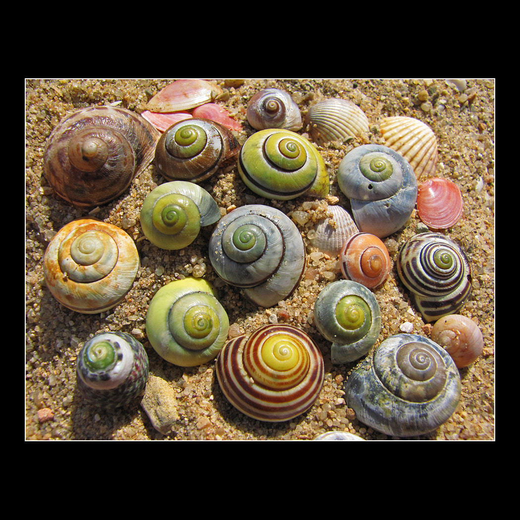 Photograph sea snails by Pedro Liborio on 500px