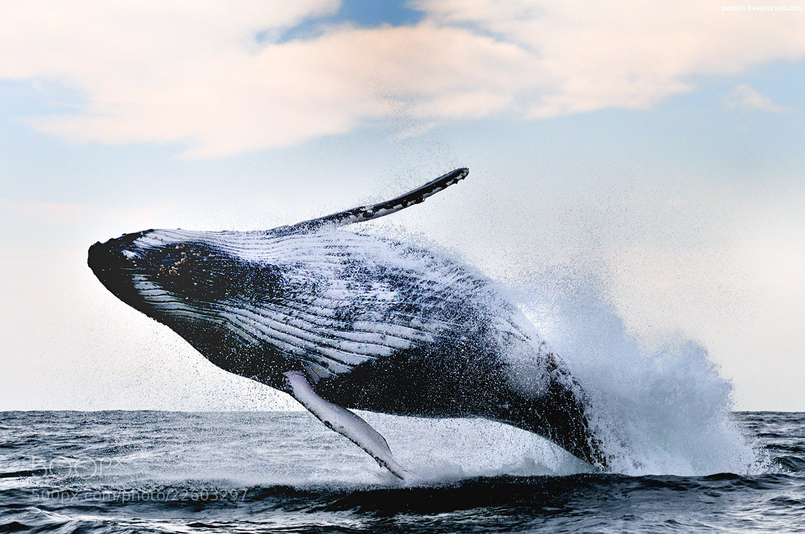 Photograph oppa humpback style !  by Alexander Safonov on 500px