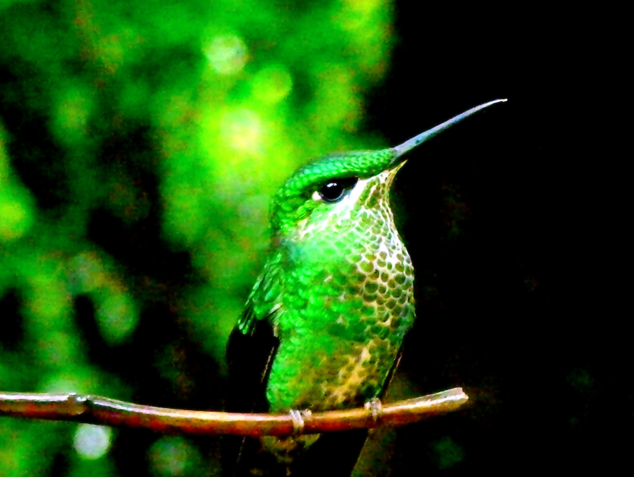 Photograph Emerald green by Naomi IB on 500px