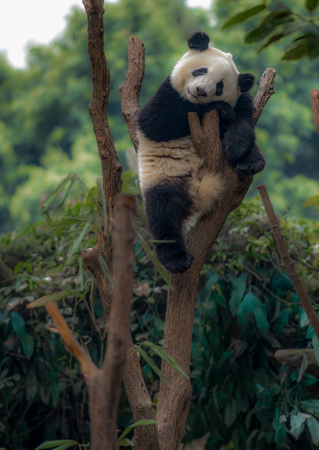 Photograph Kung fu Panda by Lou Lu on 500px