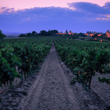 in the vineyard of Carcassonne...