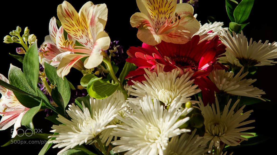 Photograph Morning Flowers by Erik Anderson on 500px