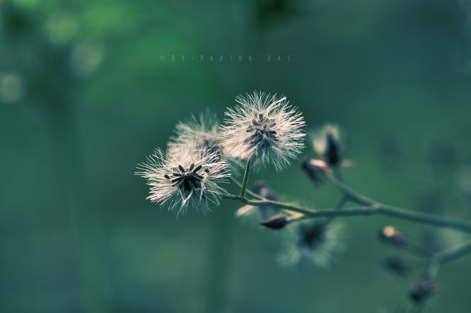 Photograph Blow softly on Me, Oh Wind... by Partha Das on 500px