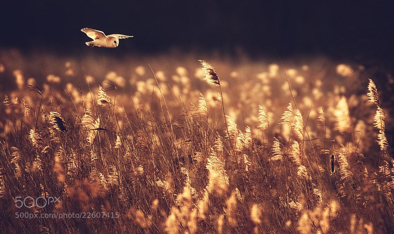Photograph barn owl split tone by Mark Bridger on 500px