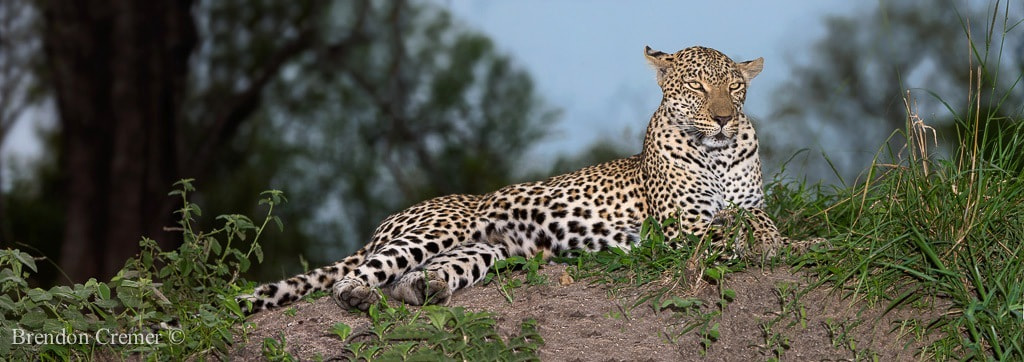 Photograph Beauty of a Queen by Brendon Cremer on 500px