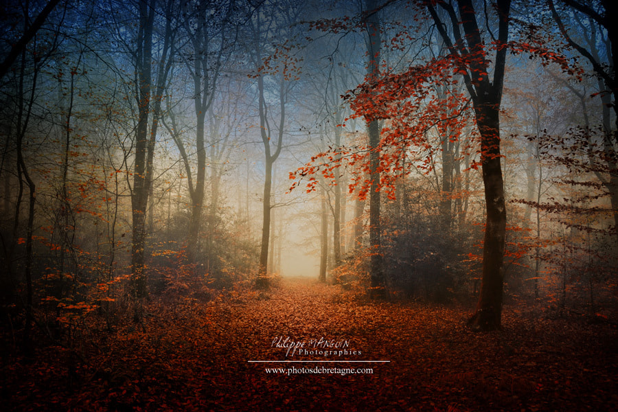 Photograph BROCELIANDE - Deep forest by Philippe MANGUIN on 500px